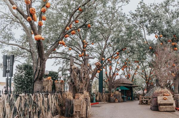 Halloween Horror Nights pumpkin trees. Trick or Treat scare zone at Universal Studios Orlando.