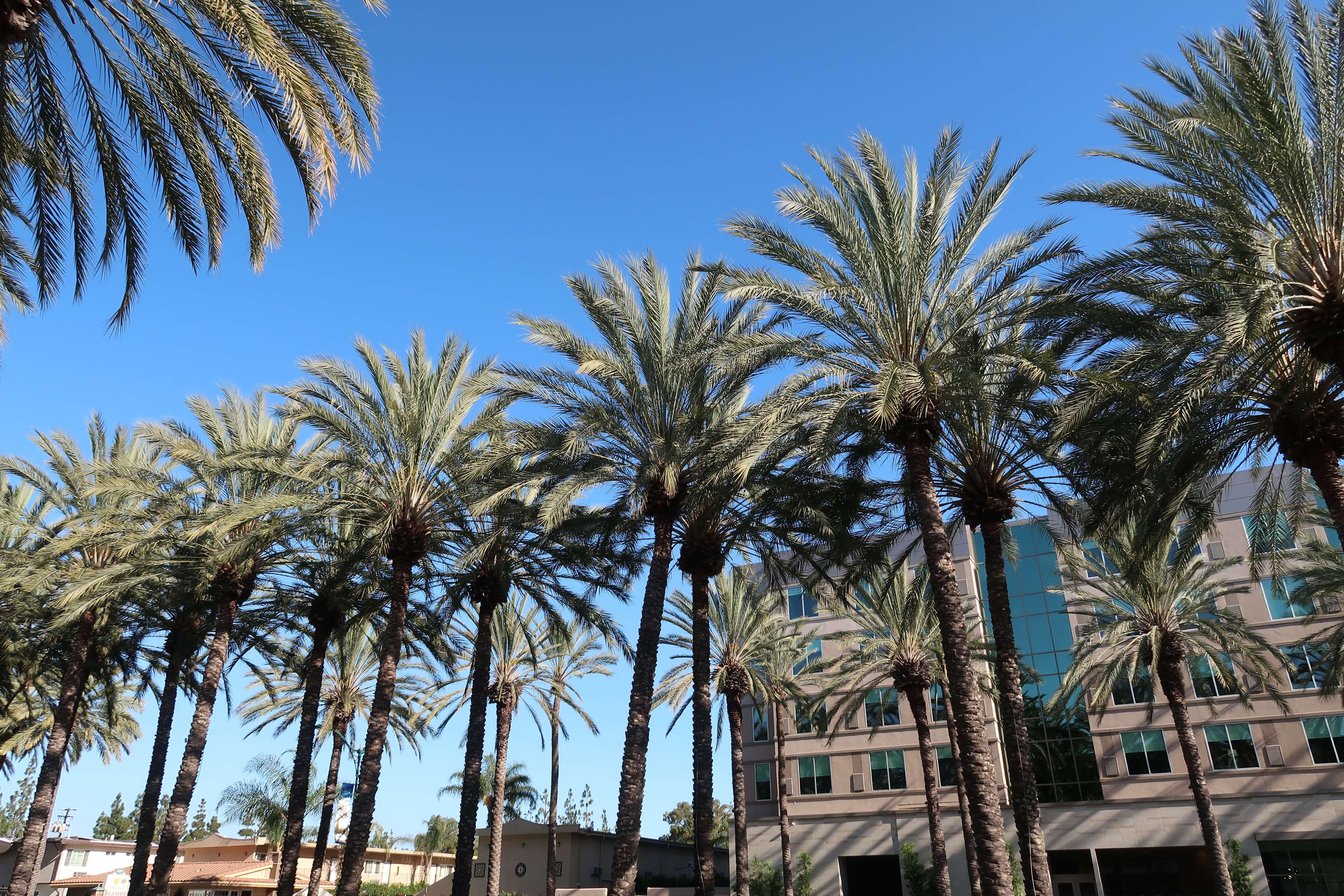 Hyatt House at Anaheim Resort near Disneyland on Katella Avenue