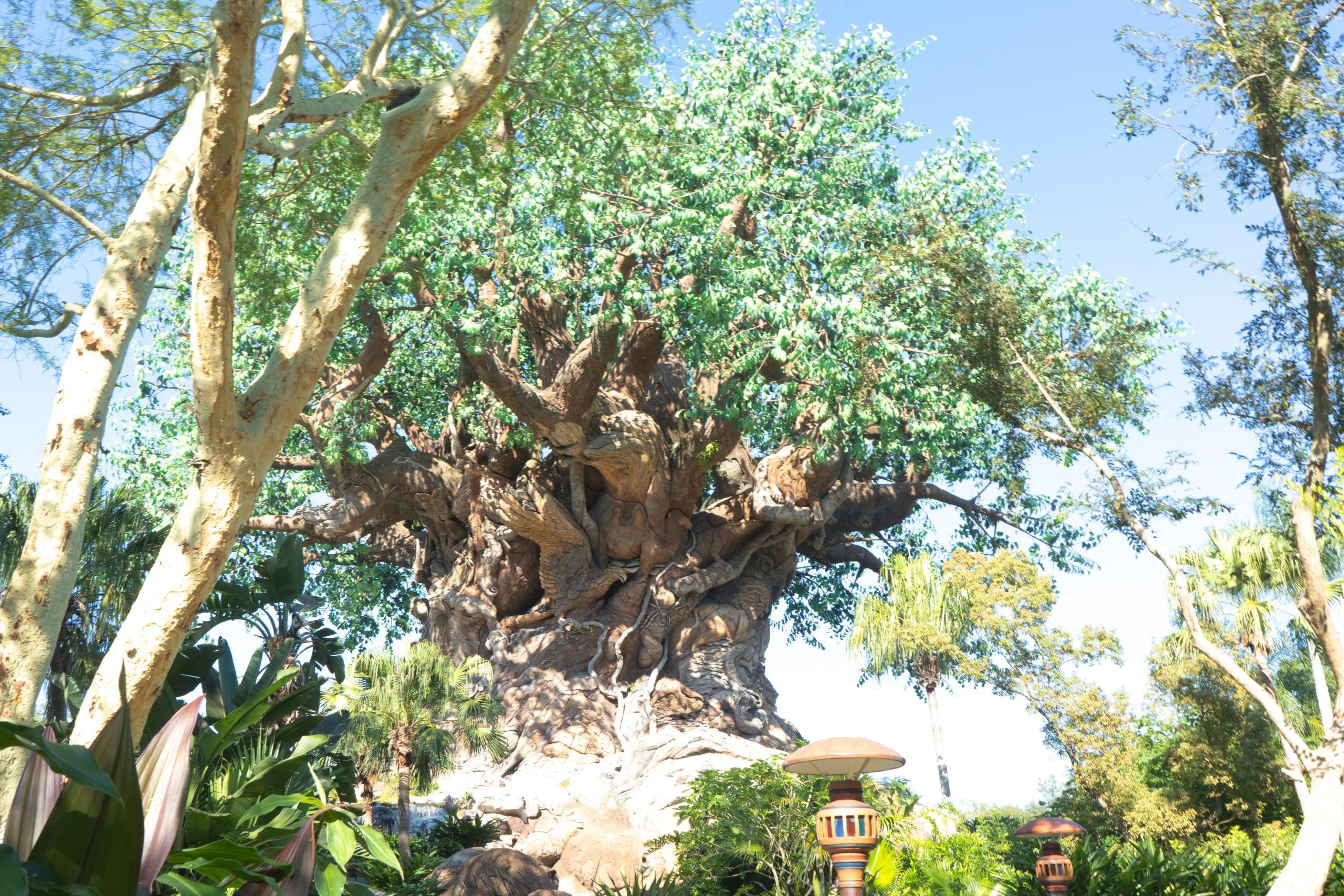 Animal Kingdom Tree of Life on a sunny day